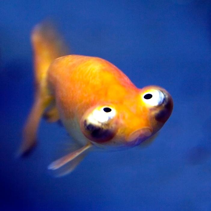 funnyfish0007_O